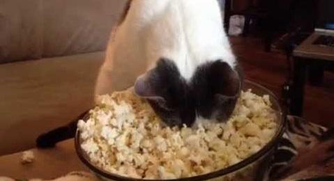 cat-popcorn-2.jpg