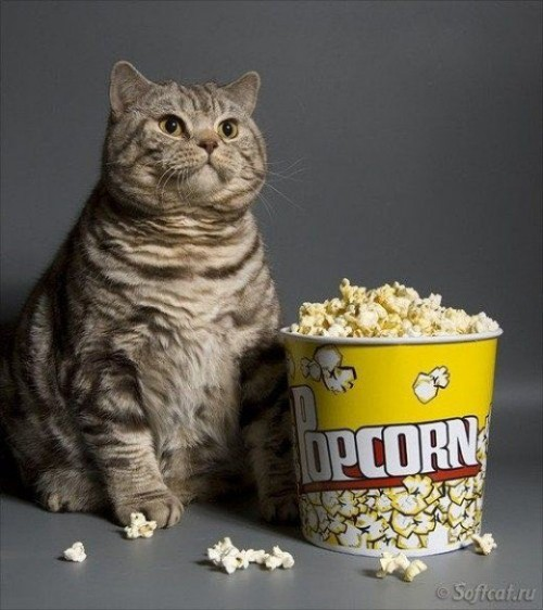 kitty-popcorn.md.jpg